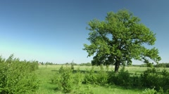 Refreshing Breeze Stirs Tree Leaves in a Meadow Stock Footage