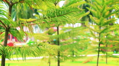 conifer trees in summer park - stock footage