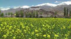 Stakna Monastary with yellow flowers,Stakna,Ladakh,India Stock Footage