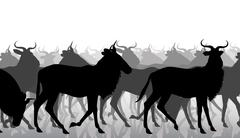 Wildebeest migration - stock illustration
