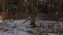 4k Harz snowy winter forest end of day panning Stock Footage