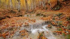 Autumn rill flow Stock Footage