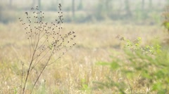 weeds in the dry paddy field - stock footage