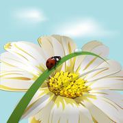 Ladybird on herb - stock illustration