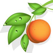 Orange peach Stock Illustration
