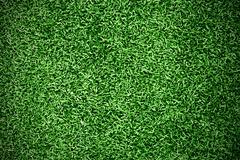 Turf grass background Stock Photos