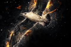 Seagull in flight. Artistic grunge fury effect - stock photo