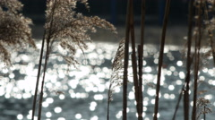 Water glitter behind reed Stock Footage