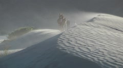 Tourist ride Camel sand dunes,Sumur,Ladakh,India Stock Footage