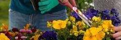 Horticulturists planting flowers - stock photo