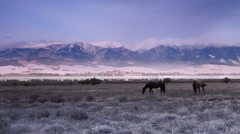 Pair of Horses graze grass on the valley with mountain landscape Stock Footage
