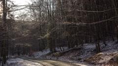 4k Dropping water frozen trees sunny snowy winter Harz - stock footage