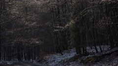 4k Dropping water frozen trees sunny snowy winter Harz Stock Footage