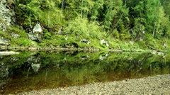Forest thickets along the river Stock Footage