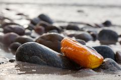 Amber stone on rocky beach. Precious gem, treasure concept. Baltic Sea, Polan Kuvituskuvat