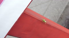 Praying Mantis Climbs Red Wooded Pillar Stock Footage