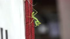 Praying Mantis On Red Wooden Pillar 02 Stock Footage