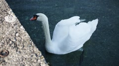 Swan on Geneva Lake Stock Footage