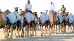 Dubai UAE camels racetrack sport racing animal Stock Footage
