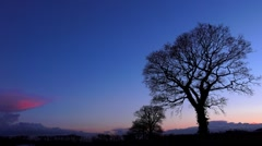 Ambient Oak trees silhouette after sunset nature background - stock footage