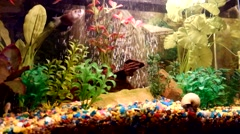 Fragment of aquarium full of water plants and small fishes Stock Footage