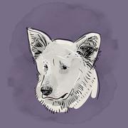 Head, muzzle the dog. Shepherd Sketch Black contour on a purple grunge backgr Stock Illustration