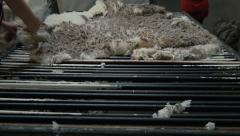 Shedhands Skirting a Wool Fleece - stock footage