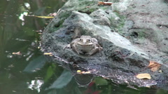 Ugly Toad - stock footage