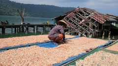 Thai woman working with dry shrimps in the fishing village. Thailand Stock Footage