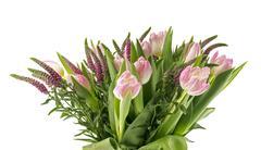 rose tulip - stock photo