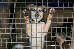 Shelter for homeless dogs Stock Photos