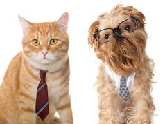Cat and dog in glasses - stock photo