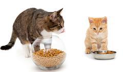 Big cat and little kitten - stock photo