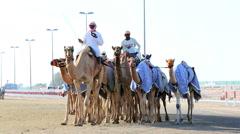 Dubai UAE camels racetrack sport racing animal UAE Stock Footage