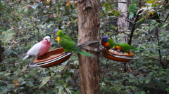 Beautiful colorful parrot Stock Footage