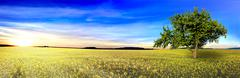 Big lonely tree on the field - stock illustration