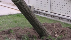 Gardening - Eradicating a tree with the crane Stock Footage