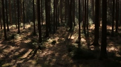 Dark Forest with sunny patches Stock Footage