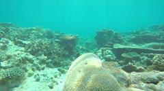 UNDERWATER: Swimming through coral garden reef Stock Footage