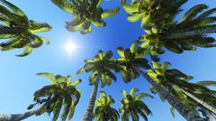 Palm trees and sun - stock illustration