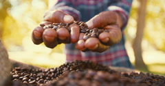 Fair trade farming is best for coffee bean produce Stock Footage