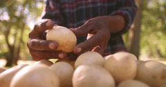 Farmer holding his harvest of fresh healthy potatoes Stock Footage
