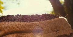 Freshly roasted coffee beans in bag Stock Footage
