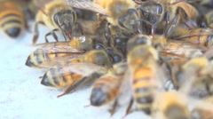 Honey Bees Stock Footage