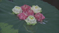 Water flowers at the Jim Thompson House Museum in Bangkok, Thailand Stock Footage