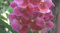 Flowers at the Jim Thompson House Museum in Bangkok, Thailand Stock Footage