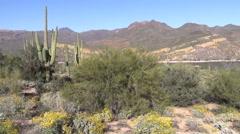 Arizona Desert Landscape in Spring Stock Footage