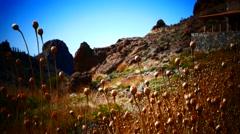 4K UHD Grasses against sunlight Mt. Teide Pico del Teide National Park Tenerife Stock Footage