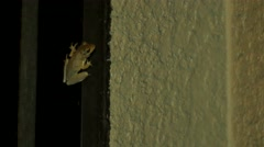 Tree frog at night inside of porch, 4K Stock Footage