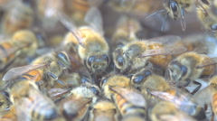 Honey Bees (Apis Mellifera) swarming around Bee hive  - stock footage